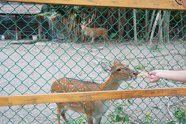 小小動物園2.jpg