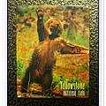 磁鐵-004-黃石公園熊豬.jpg