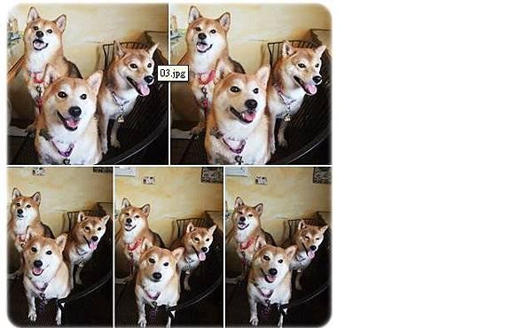 三犬.jpg