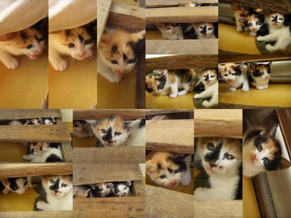1117小貓