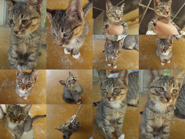 1122小貓