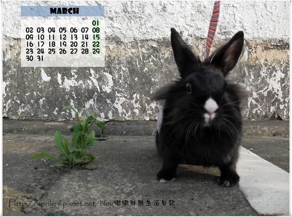 3月嘟.JPG