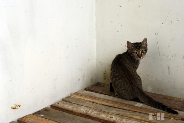0321小貓區