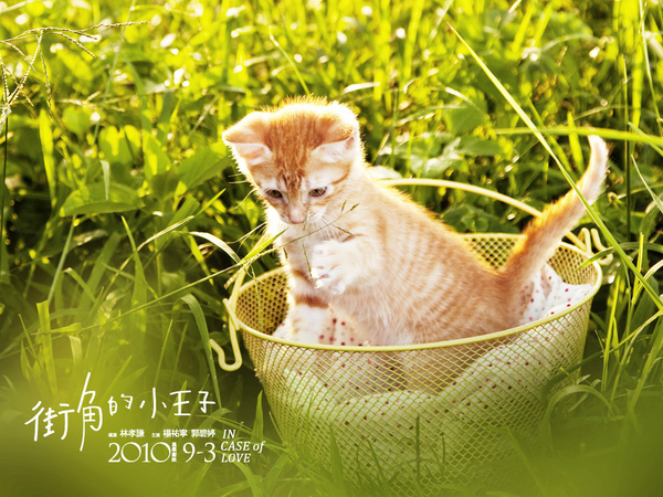 cat2桌布.jpg