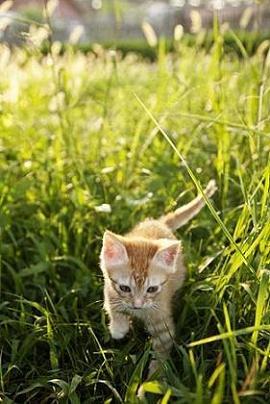 可愛小貓咪.jpg
