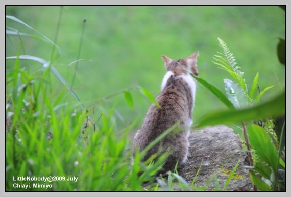 窗外的小貓咪.jpg