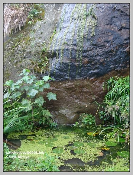 引天然山泉水的小水塘2.jpg