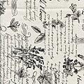 白色植物圖鑑印花布