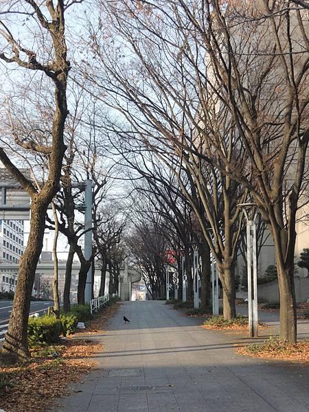 飯店隔街有公園,可以散步