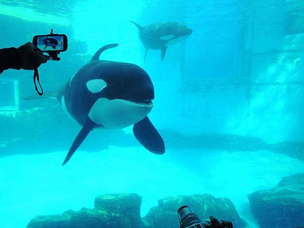 鎮館之寶就是鯨魚