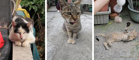 貓言貓語2