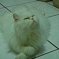 貓老爺.jpg