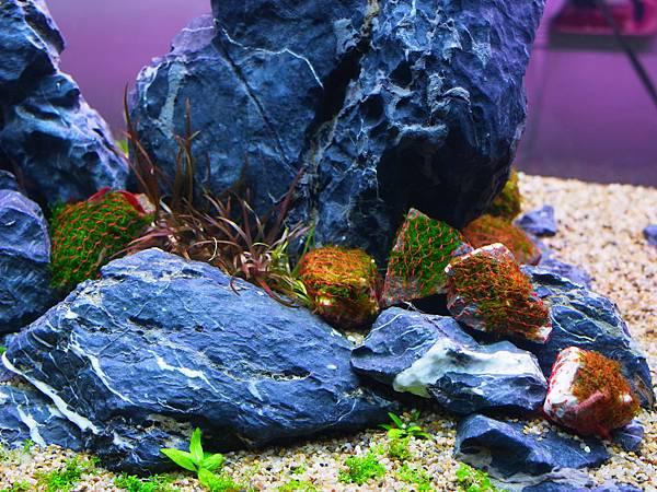 爪哇莫絲石