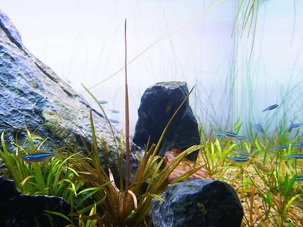 中簀藻花苞
