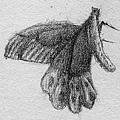 《鳳蝶》,2005年,鉛筆、紙。