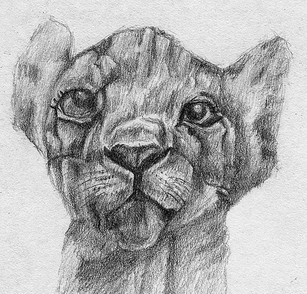 《幼獅》,2005年,鉛筆、紙。