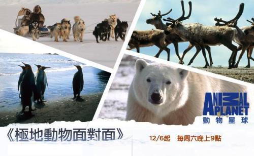 動物星球頻道 《極地動物面對面》