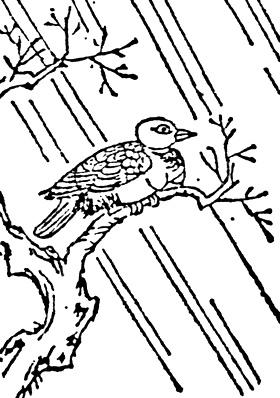 姑獲鳥(寺島良安「和漢三才圖會」)