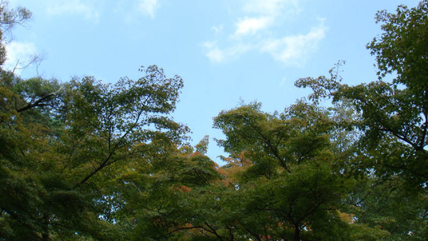 天空與雲.jpg