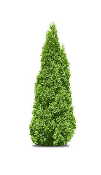 p163文筆樹的形狀
