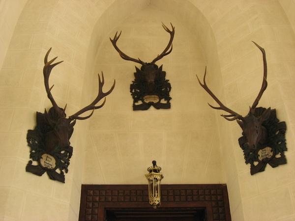 牆上的鹿頭