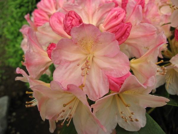 模樣有些特別的花