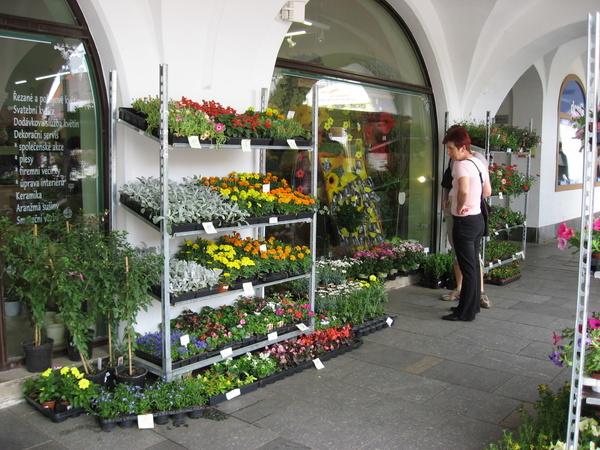 頗大間的花卉店