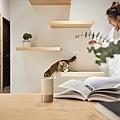 貓宅 室內設計.jpg