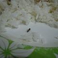 有蟲飛進來