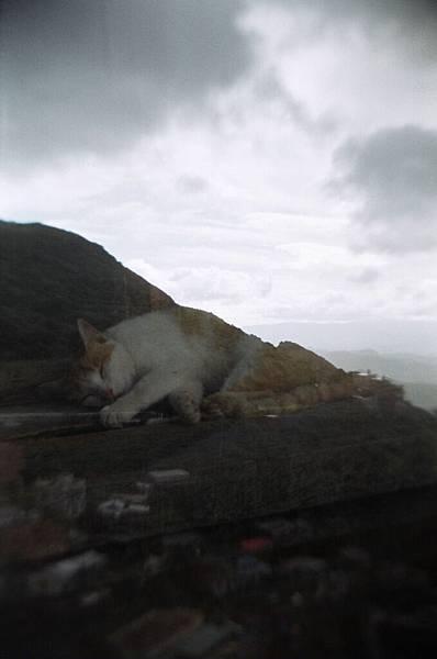 小胖橘睡在山上XD