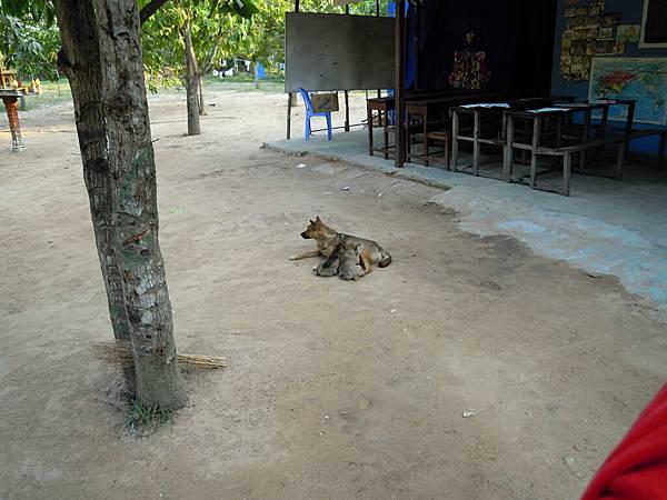 BCI孤兒院,超可愛的狗狗~~