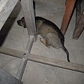 狗狗睡在桌子下~~((尖叫