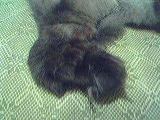 貓腳,毛毛毛