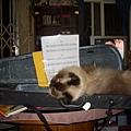 奇奇睡在琴盒