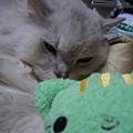 綠色的也是貓咪