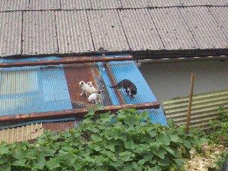 屋頂上的一窩貓