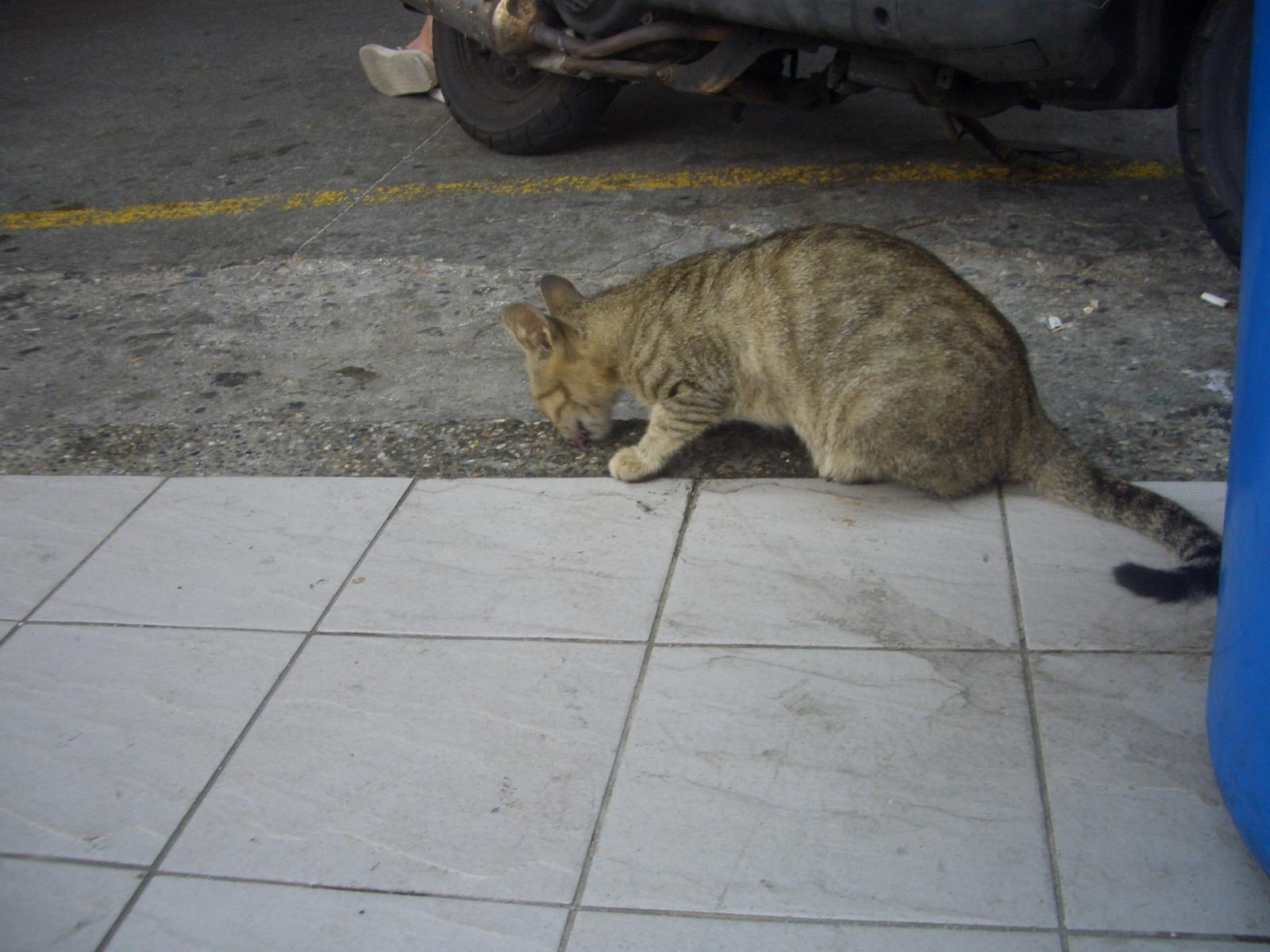 全家前面的一隻貓