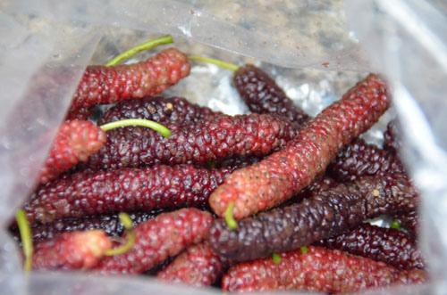 Mulberry (2).JPG