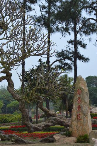 Forest Park (10).JPG
