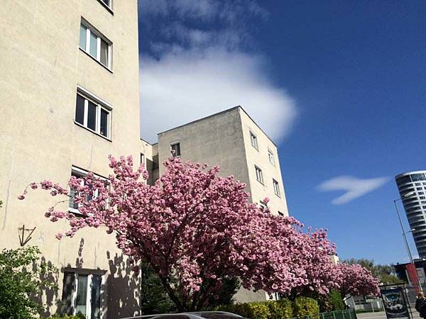 bratislava spring (1).JPG