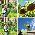 垂頭向日葵