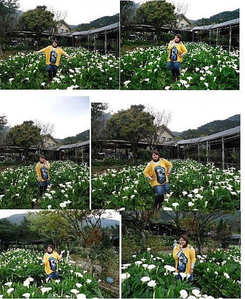 竹子湖4.JPG