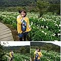 竹子湖5.JPG
