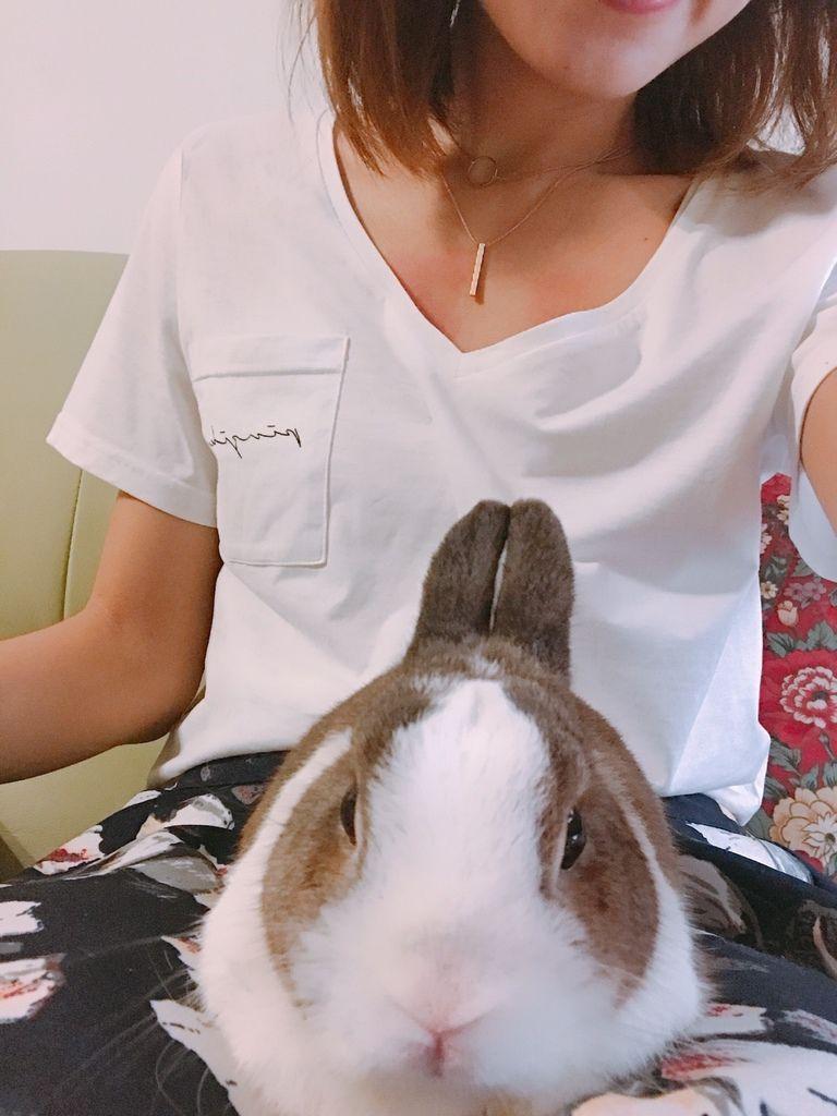 淘寶小兔_170626_0023.jpg