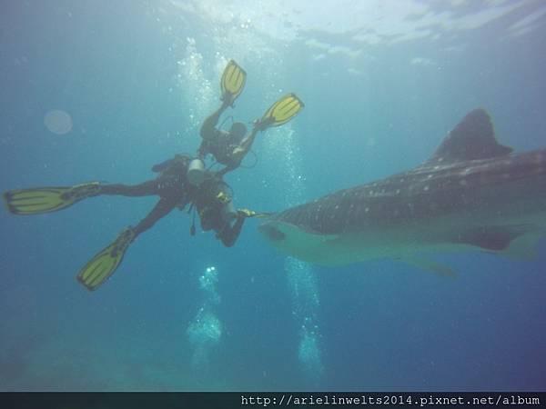 Oslob Whale shark_5315.jpg