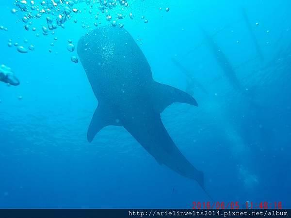 千呼萬喚屎出來之豆包鯨鯊篇_4580.jpg