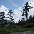 因為在高山,所以樹也都是這種高瘦的體型(我也好想要這種體型呀)
