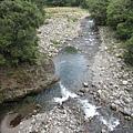 橋下應該就是七家灣溪,櫻花鉤吻鮭的棲息地