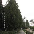 福壽山農場一進來就有一條很長的林蔭車道