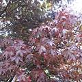 有些葉子已經開始變色了